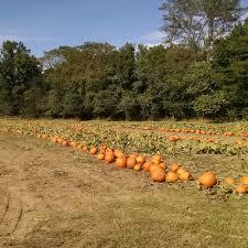 Pumpkin Patch Nw Arkansas by Roseberry Farms