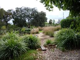 Australian Native Grasses For Landscaping