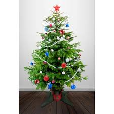 Evergreen EVERGREEN Christmas Tree Stand For Real Live Trees
