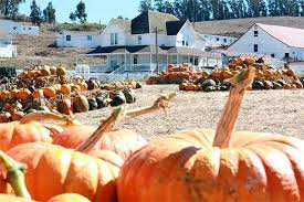 Sand Springs Pumpkin Patch by Great Peter Pumpkin Patch Google Search Great Peter Pumpkin