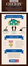 Amendoim Wood Flooring Pros And Cons by The 25 Best Brazilian Cherry Hardwood Flooring Ideas On Pinterest