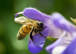 Attracting Insects To Your Garden by How To Attract Bees To Your Garden Garden Club