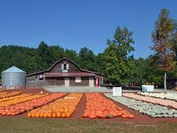 Burts Pumpkin Farm 2015 by Pumpkin Patch Farm Tour Hgtv