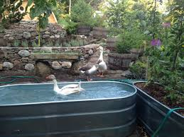Stock Tank Goose Pond | Stock Tank Goose Pond | Pinterest | Stock ... Pond Makeover Feathers In The Woods Beautiful Backyard Landscape Ideas Completed With Small And Ponds Gone Wrong Episode 2 Part Youtube Diy Garden Interior Design Very Small Outside Water Features And Ponds For Fish Ese Zen Gardens Home 2017 Koi Duck House Exterior And Interior How To Make A Use Duck Pond Fodder Ftilizer Ducks Geese Build Nodig Under 70 Hawk Hill Waterfalls Call Free Estimate Of Duckingham Palace Is Hitable In Disarray Top Fish A Big Care