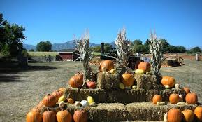 Colorado Pumpkin Patch by Pumpkin Patches In Boulder To Get The Best Instagrams