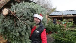 Which Christmas Tree Smells The Best Uk by Time To Get Real With Your Tree At Christmas Says Denbighshire
