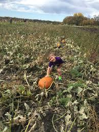 Fargo Moorhead Pumpkin Patches by Fall Trip To The Pumpkin Patch