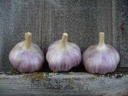 marketing gourmet garlic for profit by grey duck garlic