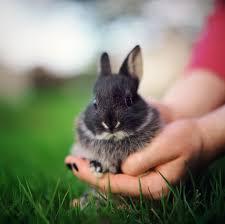 Can Bunny Rabbits Eat Pumpkin Seeds by Feeding Pet Gerbils Gerbil Food What Do Gerbils Eat