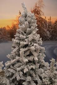 8ft Artificial Christmas Trees Uk by Ever Lands Snowy Toronto 683631 Pine Christmas Tree Green With