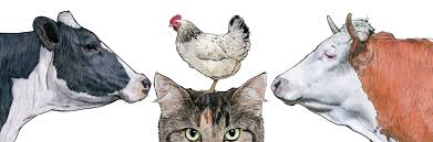 Barn Door Collection – Shawn Braley Illustration The Chicken Chick 15 Tips To Control Rodents Around Coops Bbara Obrien Photography News 2012 Horse And Barn Cat Happy Cats Rescue San Diego Susys Musings How Build A Better Brooder For Raising Baby Chicken House Turtle Rock Farm Care Feeding Of Timber Creek Barn Cats Shibumo Sneek Thief Backyard Chickens 1110 Best Chickens Images On Pinterest Backyard Adoption Program Animal Allies Humane Society