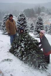 Fraser Fir Christmas Trees Nc by Everygreen Ridge Christmas Tree Farm Grower Of Beautiful Fraser