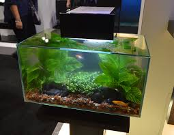 Freshwater Tanks Of The Aquatic Experience 2016, Part 1 Pin By Ally Bragg On Design Technology Pinterest Planted Everything About Aquascaping The Incredible Undwater Art Basic Forms Aqua Rebell 60 Carpet Carpeting Live Aquarium Plants Aquariums And Ideas From The Of Limnophila Sessiliflora Orange Aquatic Lab Tutorial River Bottom Natural Aquarium Plants Gardens Online Plant Specialist Supplier How To Deal With Algae Love Planting Wiki Styles Aquascapers Suitable