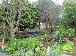 Permaculture | Agriculture And Food Thriving Backyard Food Forest 5th Year Suburban Permaculture Bill Mollison Father Of Gaenerd 101 Pri Cold Climate Archives Chickweed Patch Garden Design With Permaculture Kitchen Herb Spiral Backyard Orchard For The Yards Pinterest Orchards Australian House Garden January 2017 Archology Download Design And Ideas Gurdjieffouspenskycom Sustainable Farm Future Best 25 Ideas On Vegetable Youtube