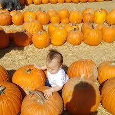 Pumpkin Patch Naples Fl by Pa U0027s Pumpkin Patch 297 Photos U0026 200 Reviews Amusement Parks