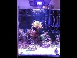aquarium nano eau de mer nano eau de mer dennerle 60l recif recifal