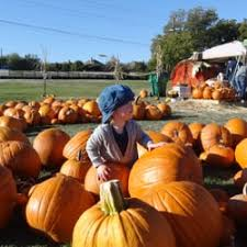 Pumpkin Patch Houston Tx Area by Tucker Hill Pumpkinville Festivals 7270 W University Dr