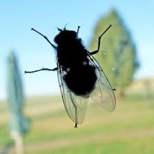 fliegen in der küche frag mutti forum