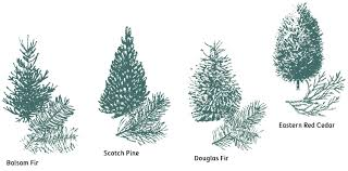 Christmas Tree Species Name by Backyard Landscape Christmas Tree Types The Types And Variety Of