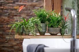 das grüne badezimmer pflanzenfreude de plant mag by