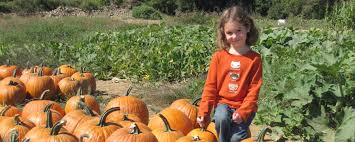 Orlando Pumpkin Patches 2014 by Favorite Things To Do In Rhode Island In The Fall We3travel