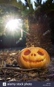 Scary Pumpkin Printable by Halloween Scary Pumpkin Jack O Lantern With A Smile In Palm Forest