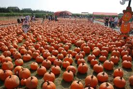 Pumpkin Picking Richmond by Ultimate Fall Guide Take Your Pick Ny Daily News