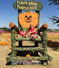 Pumpkin Patches Near Dallas Tx 2015 by Kindergarten Field Trip To Flower Mound Pumpkin Patch Dfw
