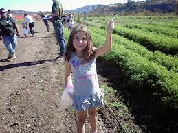 Cal Poly Pomona Pumpkin Patch 2014 by Corn Maze Archives Project Refined Life