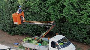 Man In A Bucket-truck Trimming Trees With A Powered Pole Pruner ...
