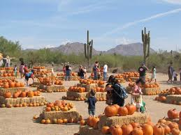 Nearby Pumpkin Patches by Macdonald U0027s Ranch Pumpkin Patch And Trail Rides Arizona Haunted