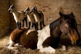 What Your First Horse Will Cost Best 25 Horse Barns Ideas On Pinterest Dream Barn Farm Shedrow Barns Shed Row Horizon Structures Lshaped Indoor Riding Arenas Arena Home Design Post Frame Building Kits For Great Garages And Sheds Barn Style House Build Your Own Homes Small Monitor Wood Horse Stables Archives Blackburn Architects Pc Shelter For Miniature Donkeys Or Goats Pros Timber Framed Denali 60 Gable Youtube