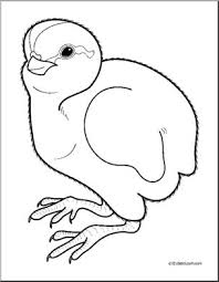 Clip Art Baby Animals Quail Cheeper Coloring Page I Abcteach