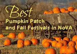 Seattle Pumpkin Patch by Best Pumpkin Patch And Fall Festivals In Nova Mcenearney