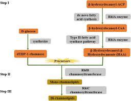 rhamnolipid the glycolipid biosurfactant emerging trends