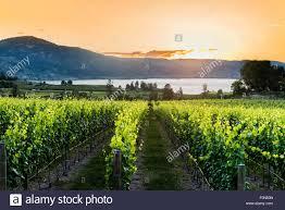 100 Naramata Houses For Sale Vineyard At Sunset Bench Okanagan Valley British