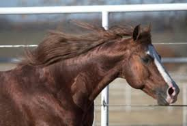 Horse Coat Shedding Tool by Equine Winter Skin Care Expert Advice On Horse Care And Horse Riding