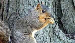 how to keep squirrels from digging up crocus bulbs garden guides