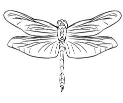 Dragonfly Coloring Pages Drawn Page Simple