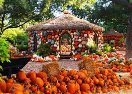 Pumpkin Patches Near Dallas Tx 2015 by 146 Best Autumn At The Arboretum Images On Pinterest Dallas
