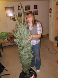 Top Live Christmas Trees by Decorated A Live Christmas Tree Never Have I Ever