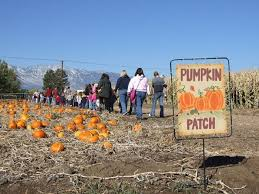 Pumpkin Patch Colorado Springs 2015 by 10 Great Pumpkin Patches In Nevada