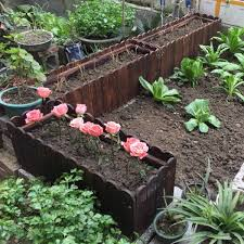 Best Soil For Raised Bed Gardening Results Are In Local