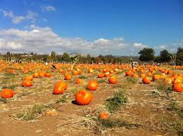 Pumpkin Patch Farm Temecula by Adventures Of A Semper Fi Family Pumpkin Patch Fall Bucket List