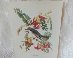 Audubon Bird Prints Vintage Art Decor