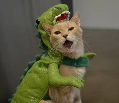 cat batman costume dinosaurs uproxx