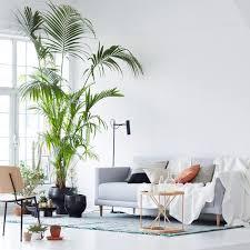 hoher besuch große zimmerpflanzen bild 3 living at home