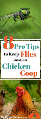 Get Rid Of Flies In Your Chicken Coop For Happier Hens! | Coops ... 25 Unique Flies Outside Ideas On Pinterest Sliding Doors How To Prevent Mosquitoes In Your Back Yard Infographic Images On New Do You Get Rid Of The Backyard Architecturenice Outdoor Goods Mix These 2 Ingredients And House Will Be Free Of Flies Organically Why Are Dangerous To Of Them Brody Pintology Pine Sol As Fly Repellant And Picture Fascating In The Naturally With 5 Simple Steps
