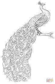 Click The Peacock Coloring Pages To View Printable Version Or Color It Online Compatible With IPad And Android Tablets