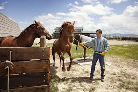 Equine Breeding Farm Careers Barn Willow Jobs Angellist The 25 Best With Horses On The Job Isaiah Blackwell A Stable Manager At High Standard Hiring Trainers 1 Resource For Horse Farms Stables And Manager Career Profile Job Outlook Open Position Stable Assistant Parttime Agape Who Wants To Get Married In An Old Barn Plenty Of Folks Cover Letter Examples Spning Mill Design Hollow Cstruction
